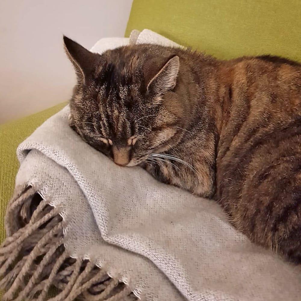 Katze schläft auf Wolldecke auf dem Sofa